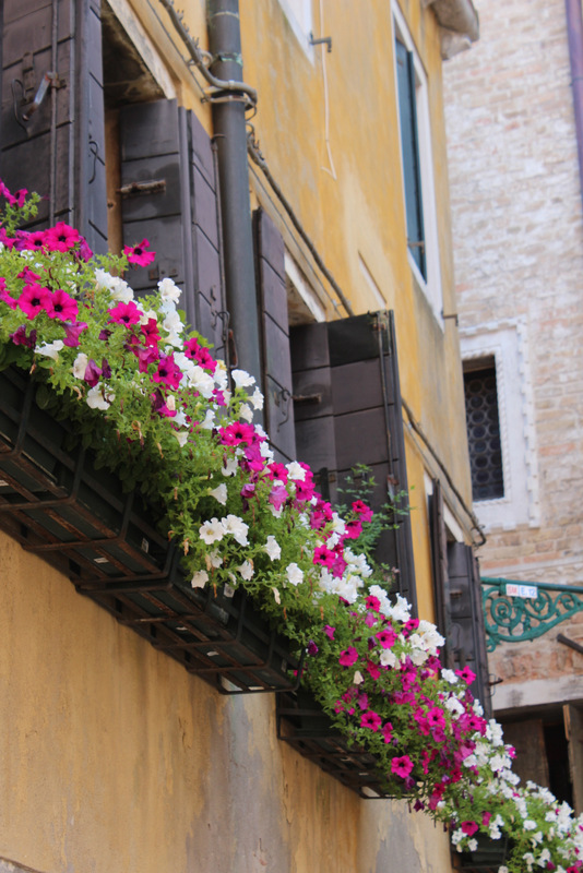 Typical window boxes